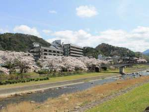 当館前に流れる三徳川沿いの「やなせ公園」では毎年美しい桜が咲きます