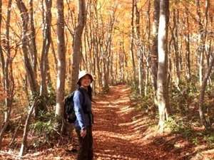 【秋のブナ林】例年10月中旬~11月上旬頃は、鮮やかに紅葉。秋の紅葉散策をお楽しみください。
