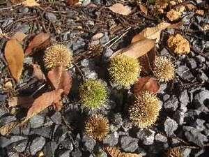 季さらの周りには自然が、いっぱい