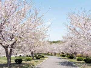 【八戸公園:車で16分】サクラの杜の遊歩道