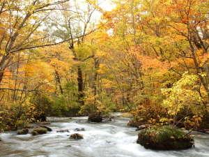 「奥入瀬渓流」:紅葉が美しい秋の様子です。