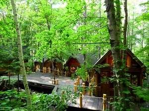 ホテルに隣接した、森の中のロマンンチックショッピングエリア【ニングルテラス】