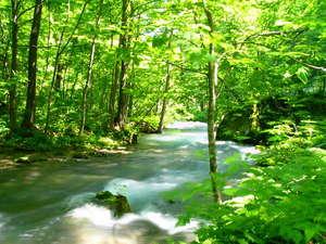 *千変万化の美しい流れや様々な奇岩・奇勝が見事な渓流美を作り、四季折々の自然美を堪能できます*