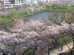 桜の季節はこの立地ならではの眺めと雰囲気を味わって