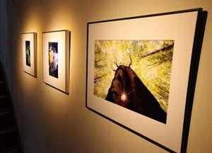 館内には オーナーの写真が並び ギャラリーの雰囲気です。