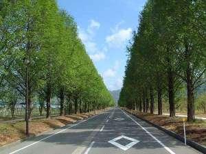 奥琵琶湖の名所「メタセコイア並木」 当館より徒歩1分!