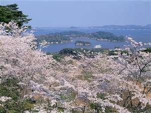【春】西行戻しの松公園
