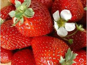 『あま~い♪♪』もぎたて苺に大満足☆真っ赤に熟した新鮮な苺にほっぺたがにんまり♪