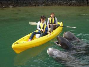 【太地町立くじらの博物館】カヤックアドベンチャーではカヤックに乗り、クジラたちの近くへ急接近!