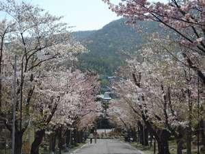 園内の桜並木は5月初旬が開花予定です。