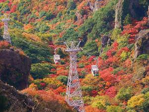 【寒霞渓ロープウェー】紅葉シーズンは山全体が秋色に♪