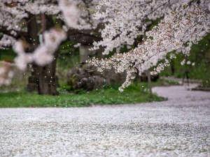 【谷厳寺の千本桜】(中野市):例年の見頃は4月中旬~下旬