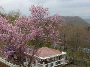 ガーデンの桜