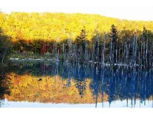 ◆青い池◆秋の青い池