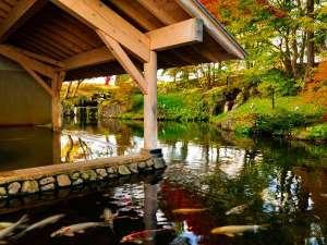 【雫石高倉温泉(秋)】すぐそばには鯉が泳ぐ池があります。