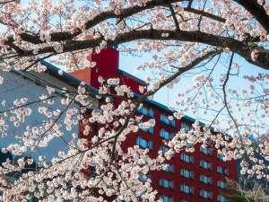 ■日本庭園■華松園の春