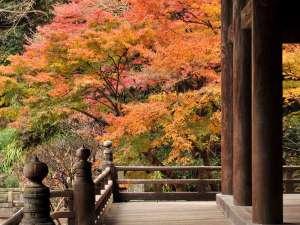 !鎌倉の秋※写真提供:鎌倉市観光協会