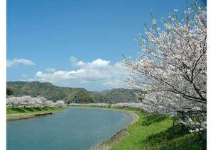 青野川の染井吉野をお楽しみ下さい♪