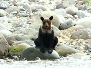 ヒグマ。お客様から「合成写真ですか?」と聞かれますが野生の熊です♪
