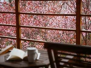 デッキよりの桜。例年5月中旬には見頃を迎えます。