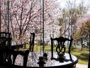 1Fロビーでは美しい桜がお客様をお迎えいたします(2013/5/26撮影)