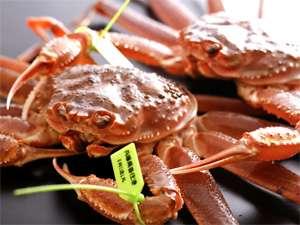 新鮮!旨い!冬の日本海といえばずわい蟹を食べなきゃ☆