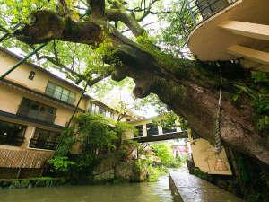 ◆犬鳴川のせせらぎを身近に感じ緑豊かな自然が溢れています
