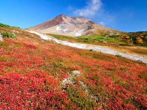 真っ赤なナナカマドや黄色いダケカンバが鮮やかに山肌を染めていきます