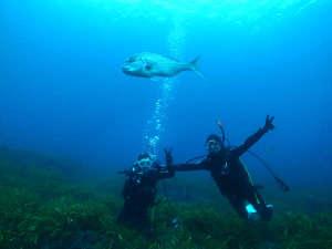 海へ潜ると魚がこんなに近くに寄ってきます☆日本海は水の青さも自慢です!