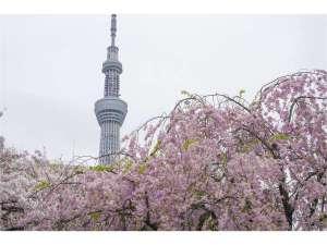 徒歩0分の隅田公園はお花見に最適なスポットです。