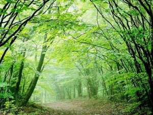 森林浴を楽しめるリゾート