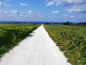 「フォトジェニック」だと、女子の間で大人気な白い道♪ホタテ貝を砕いて作った道なのです♪