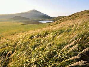 【すすき野原】秋になると外輪山周辺や草千里ヶ浜、長者原などのすすき野原が黄金色に輝きます
