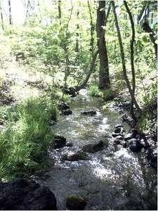 庭の前を流れる小川(COCO)