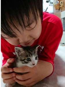 子猫と触れ合えます♪