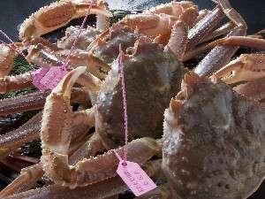 選りすぐられたタグ付の蟹
