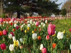 稲敷市「和田公園」4月