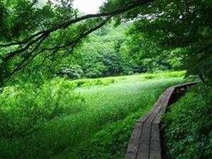 涼を求めて、夏のハチ北高原へ、お越しになられませんか♪