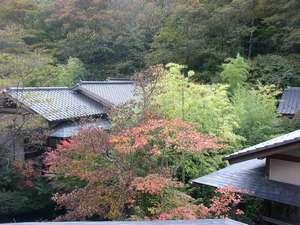 【外観】初秋の庭と離れの屋根