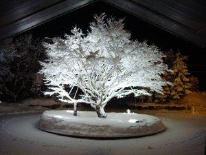 【冬】シンボルツリー楓の雪化粧