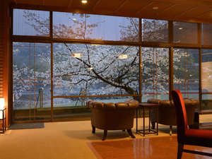 宇治川沿いの桜をながめて・・例年の見頃は3月下旬~4月上旬です。