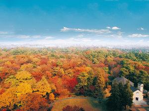 *【庭園・秋(一例)】紅葉した昭和の森は、客室からも眺められる絶景です