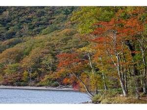 【紅葉】赤城山(見ごろは10月下旬から11月中旬頃となります。天候などで前後します。)