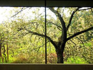 ■滝ノ原温泉-春 窓一面に銀桜。絵画のような情景を楽しみながら…