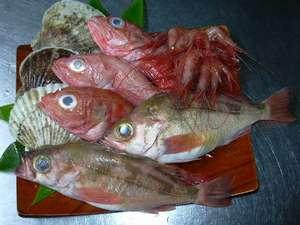 知床産きんき・ほたて、日本海産のどぐろ・あまえび・めばるなどの高級魚
