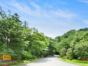 この小高い山ひとつが緑水亭の敷地です『秋保の特等席』
