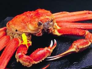 福井の冬の味覚の王者『越前がに』は毎年11/7~3/末までご堪能いただけます。