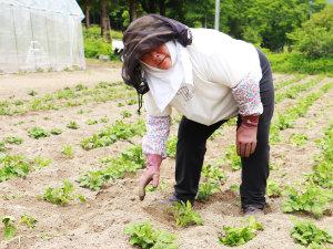 大女将が作る美味しい野菜♪