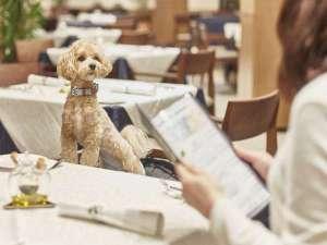 【食事】レストランにもワンちゃん同席でお食事が出来ます