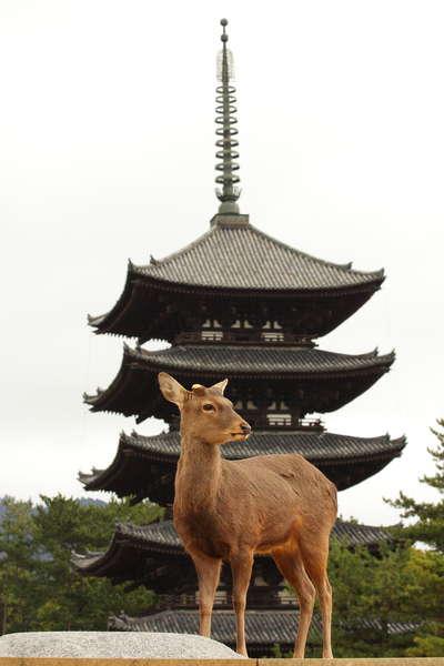 興福寺の国宝五重塔を日航奈良限定で特別公開うちの宿自慢特集
